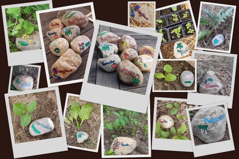Galets marque légumes pour le jardin partagé